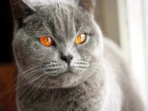Спорная территория у котов