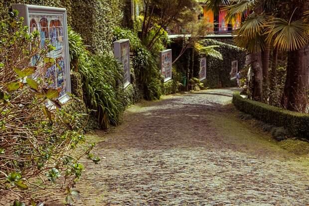 Тропический сад на острове Мадейра