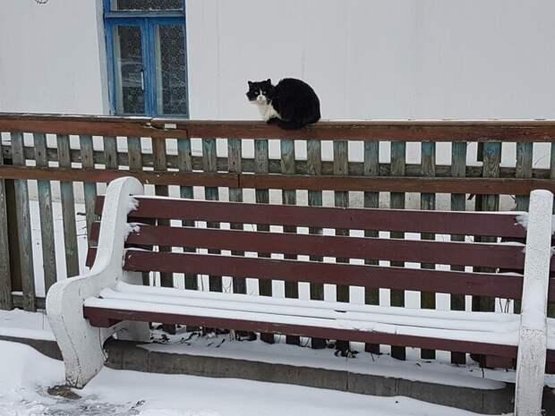 Повышая уют Хвостатые, братья наши меньшие, город, кот, кошка, улица, уличные кошки, эстетика