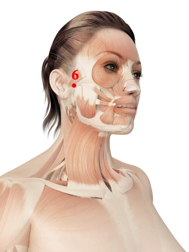 Точки для оздоровления щитовидной железы