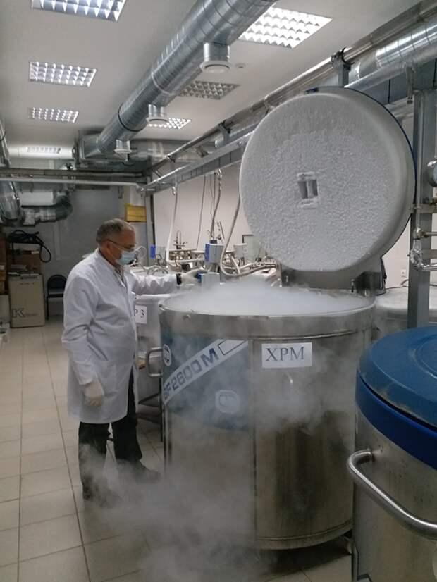В НМИЦ Гематологии нашли способ сократить время подготовки костного мозга к трансплантации