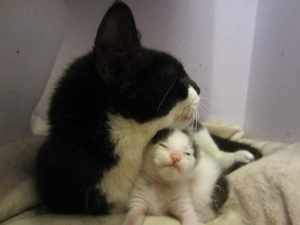 Ей было очень плохо… Но она знала, что её крошечный малыш должен появиться на свет!