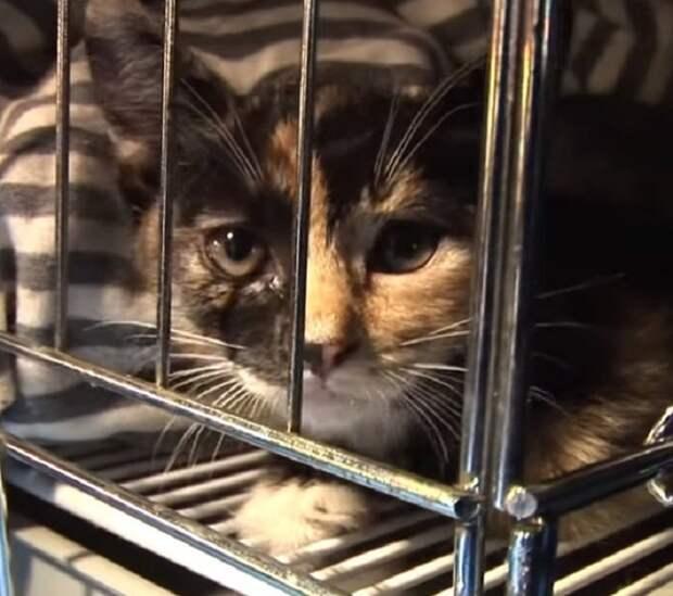 Котенок в клетке