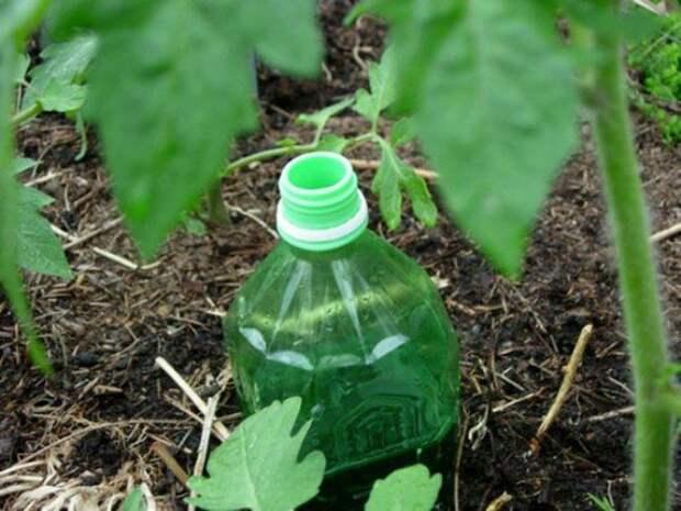 Запихиваем в бутылку полотенце, наливаем воду и закапываем. /Фото: infoniac.ru.