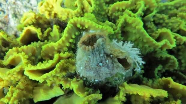 Обнаружено морское существо со способностью к полной регенерации