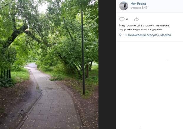 В парке усадьбы «Михалково» над дорогой сломалось дерево