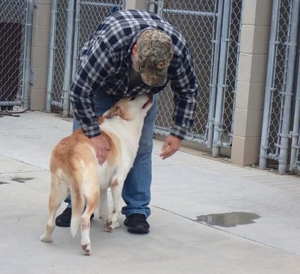 Приютский пёс заплакал, узнав стоящего перед ним человека