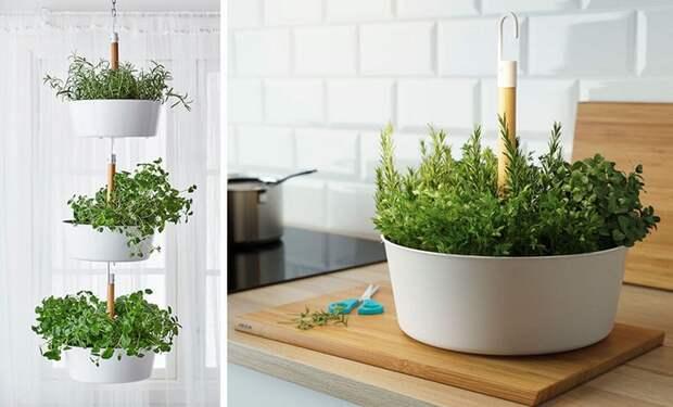 Какой уютный дом без комнатных растений?