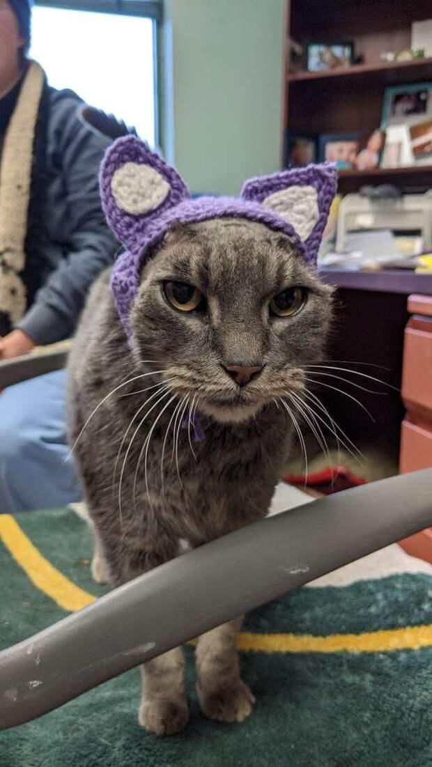 Кошка с больными ушами попала в приют. Все волновались, найдётся ли дом для особенной МУРлыки