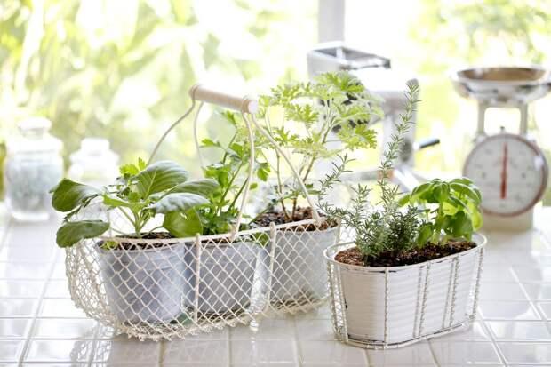Картинки по запросу decoracion con plantas de interior