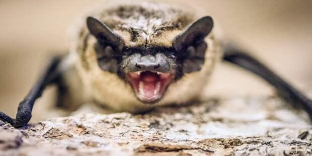 Находили ли вы в жилых домах Марьиной рощи летучих мышей? – новый опрос жителей района