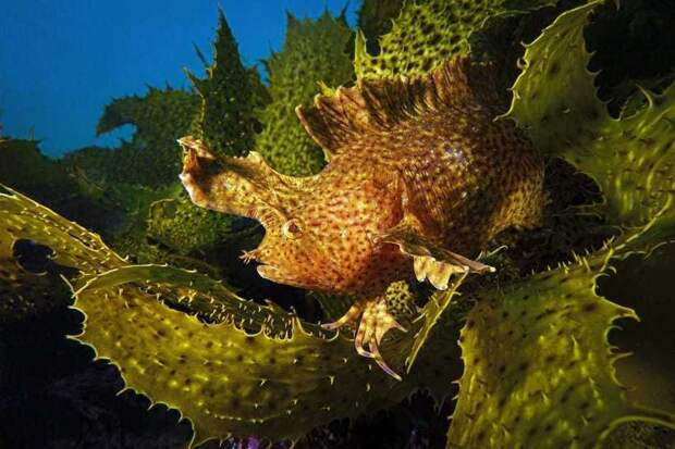 Невероятные победители конкурса океанической фотографии