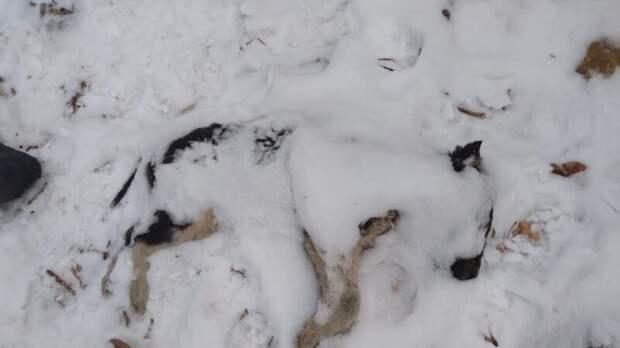 В Кузбассе найдены трупы собак в пластиковых пакетах