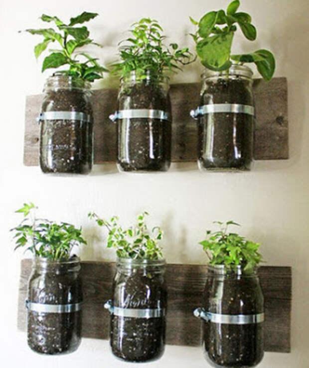 Свежесть зелени и трав круглый год: 15 идей для домашнего огорода на кухне...