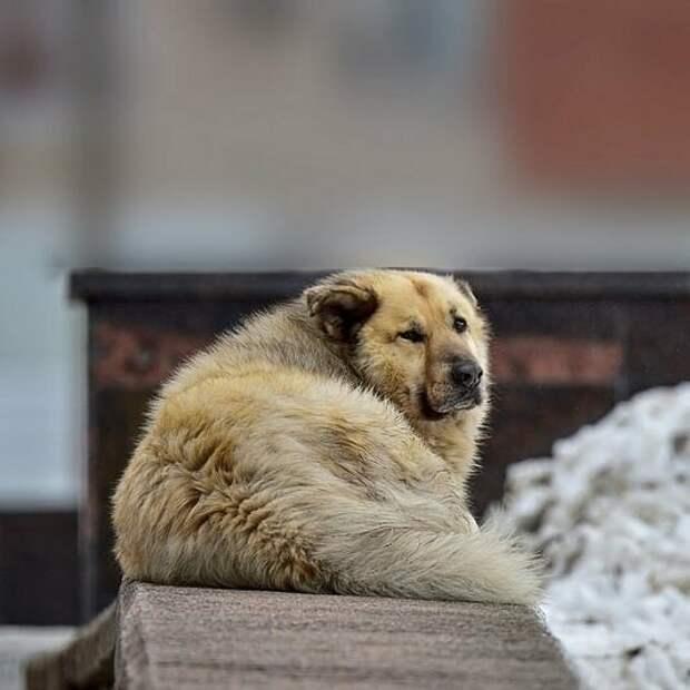 Кефир — пример того, как бездомная собака может жить в гармонии с людьми