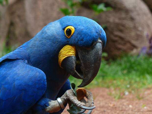 В Нидерландах компания заплатит €68 тысяч за смерть напуганных попугаев