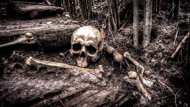 Человеческий скелет обнаружили в парке в Барнауле