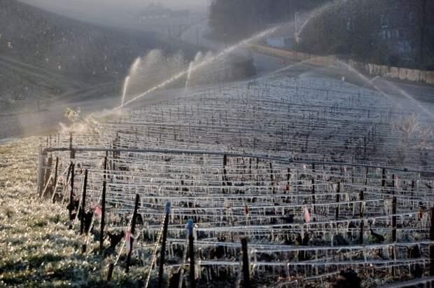 Власти Франции выделят пострадавшим от заморозков хозяйствам 1 млрд евро
