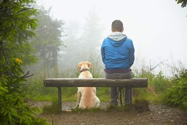 Они шли рядом. Молодой прихрамывающий парень и старый пес животные, рассказ, собака