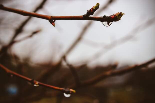 Небольшие дожди ожидаются в Удмуртии в четверг