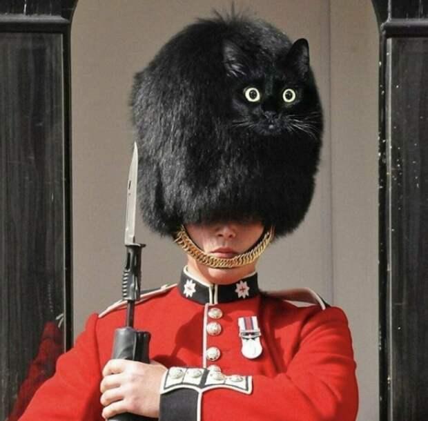 Невероятная месть кота Скрипалей