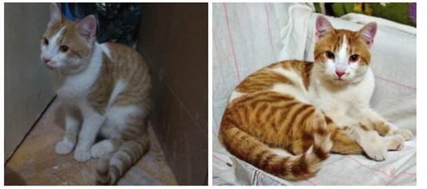 Любительнице животных из Кузьминок судьба подарила точную копию потерявшегося кота
