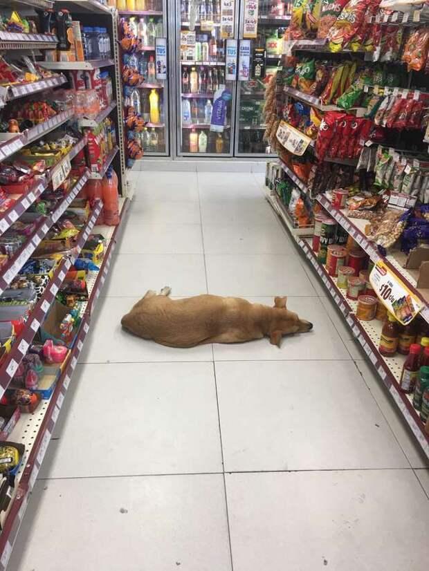 пес в магазине
