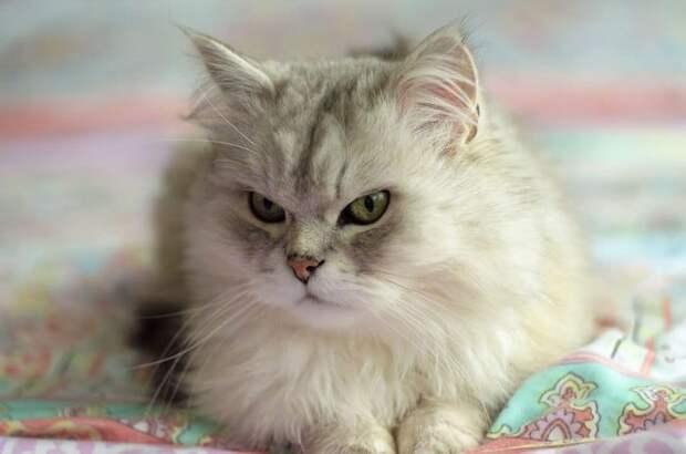 «Вы все говорили, что это злой кот. Но у него просто суровая история!» Рассказ обиженного хозяина
