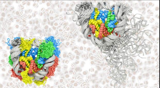 Суперкомпьютер помог учёным разобраться с дыханием и скольжением ДНК