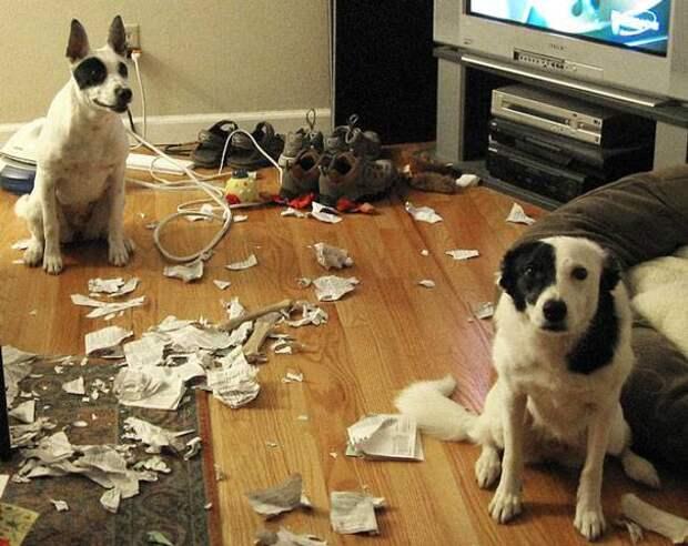 14 собак, в которых иногда просыпается чертенок