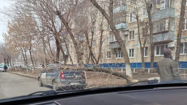 ВОренбурге средь бела дня научебный автомобиль рухнуло дерево