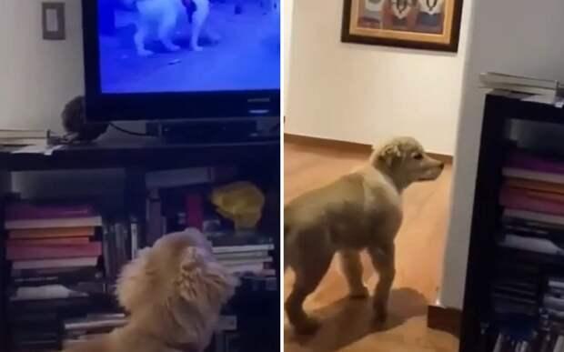 «Что за магия?»: попытки щенка найти собак из телевизора сняли на видео