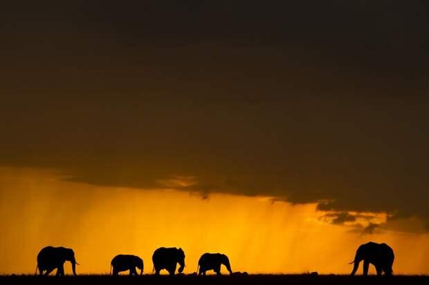 ФОТОВЫСТАВКА. Paul Goldstein: африканские закаты