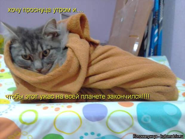 kotomatritsa_o (700x524, 319Kb)