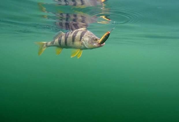 Ээээ, куда вы меня тащите  лето, природа, рыбалка, хобби