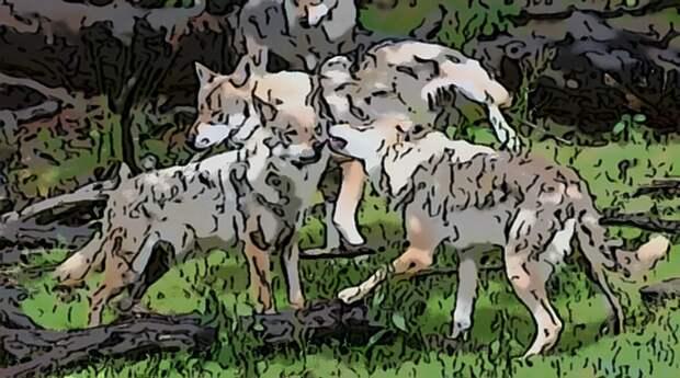 Несколько волков расступились и на передний план вышел тот самый бедняга с пластиком на голове.