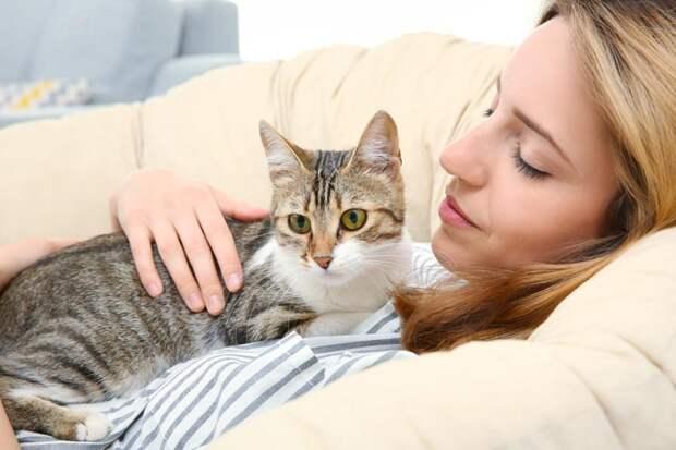 Почему твой кот пришел именно к тебе