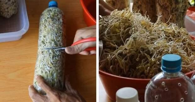 Хрустящие, свежие ростки: полезные проростки без усилий