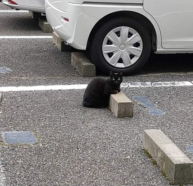Кошки спят на парковочных бамперах, как на подушках