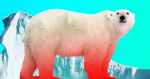 Какие животные вымрут из-за глобального потепления?