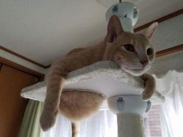 Правдивые фото, в которых отражена вся суть кошачьей натуры