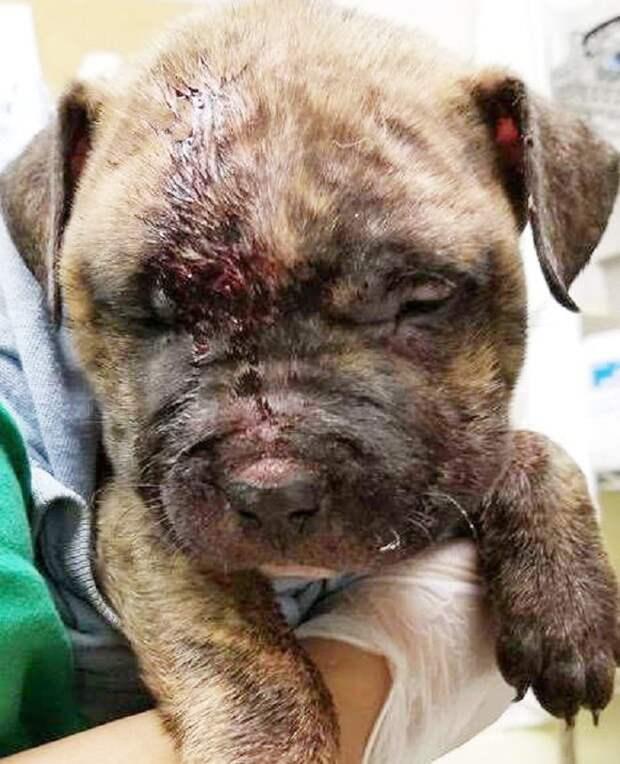 Побитый щенок