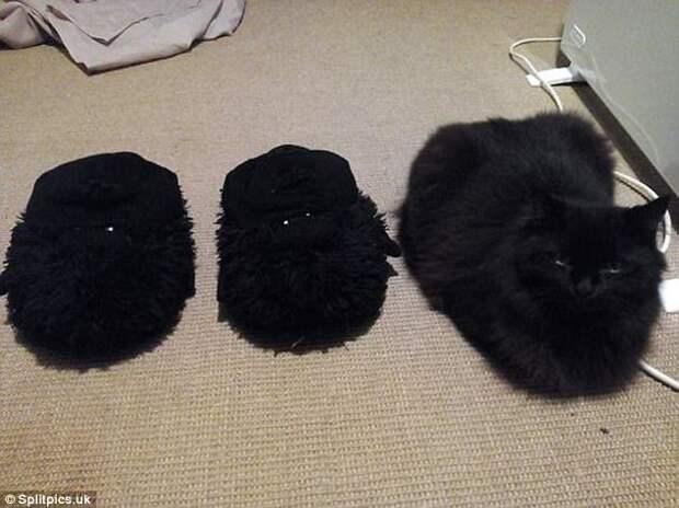7. Три меховых тапочка домашние животные, коты, кошки, маскировка, маскируется, прятки, смешные кошки