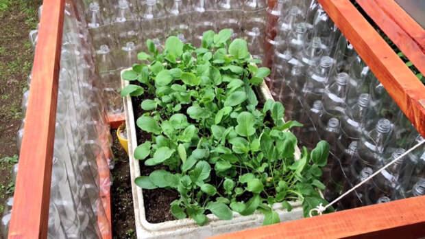 Полезная идея переработки пластиковых бутылок для огорода