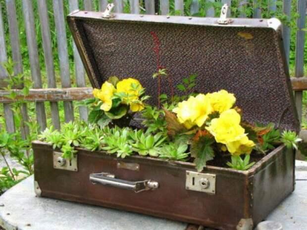 Бюджетные садовые хитрости
