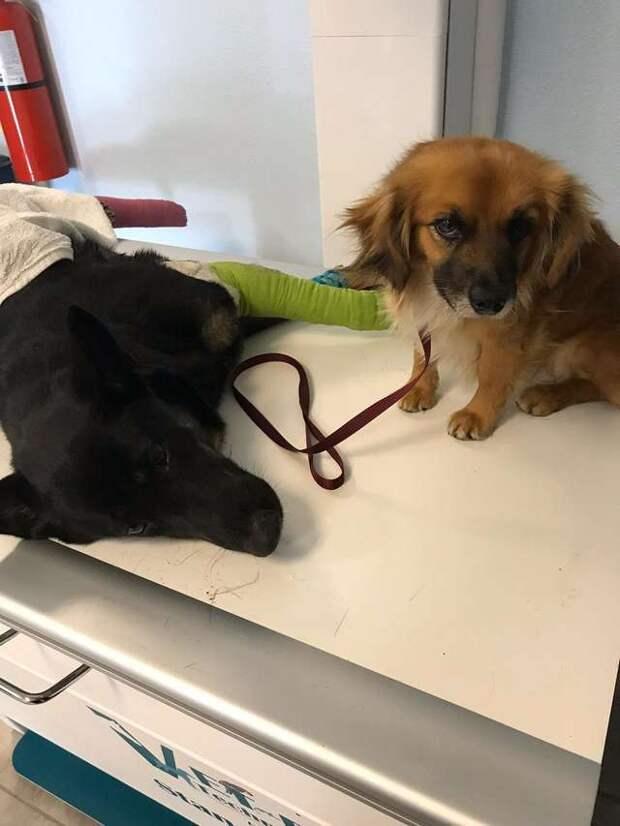 собаки в больнице