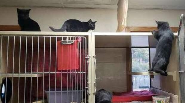Побег четвероногих: котята, названные в честь героев книги «Оно», решили повеселиться