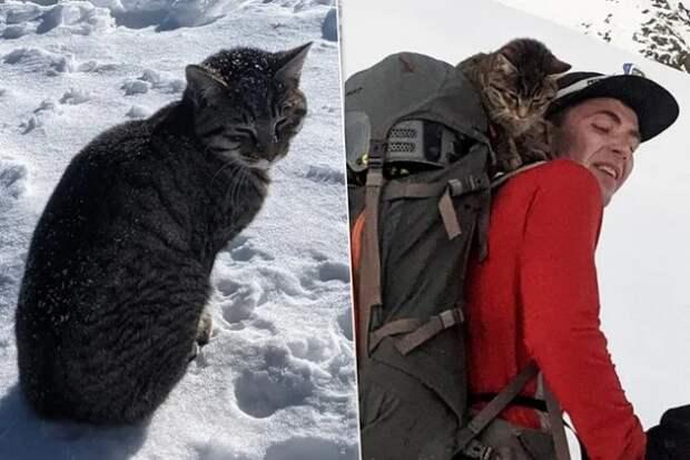 Кошка прибилась к альпинистам и преодолела высоту в 3 км, чтобы вернуться домой