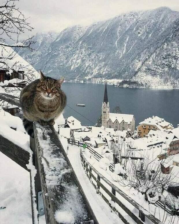 20+ доказательств того, что все коты - немного батоны