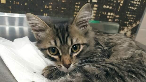 Спасенному из пожара в Невьянске котенку грозит усыпление